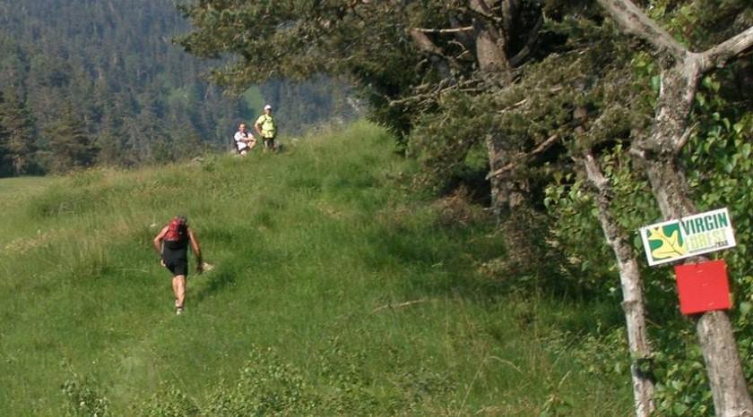 Virgin Forest Trail